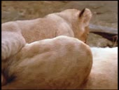 HBO Archives - Wild Animal Families