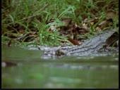 HBO Archives - Crocodile Life