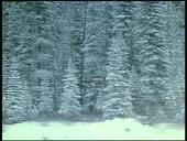 HBO Archives - Alaskan Wildlife